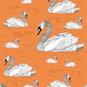 Swans Tangerine
