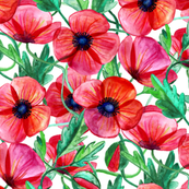 Plenty of Poppies - Watercolor on White