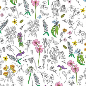 HEBE Flower Garden on White