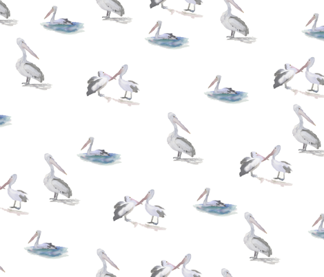 Painted Pelicans