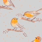 robin birds