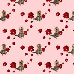 Yorkie&flowers