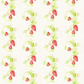 Strawberry Vine