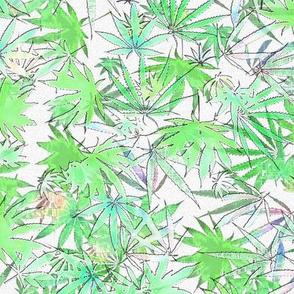 Translucent Cannabis