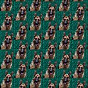 German Shepherd Head 2