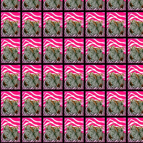 Black and White African Zebras with hot pink zebra background