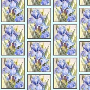 Blue Iris at Dawn