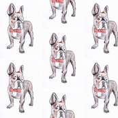 French bulldog | illustrated baby or children's fabric