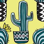 Cactus Scmacktus