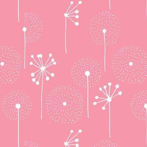 Scandinavian dandelion flower blossom garden summer fall pink