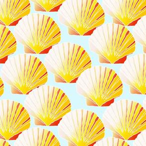 seashells_foam