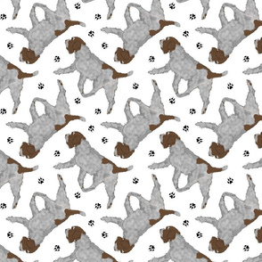 Trotting Wirehaired pointing Griffon and paw prints - white