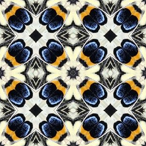 Butterfly Wings | blue, golden yellow, black, and cream
