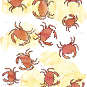 Crabs in the sand
