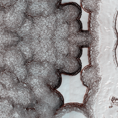 Mars MRO HIRISE South Pole Cap