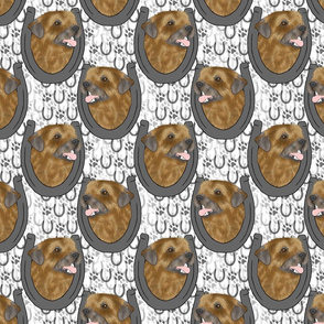 Border terrier horseshoe portraits