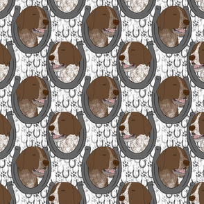 German shorthaired Pointer horseshoe portraits