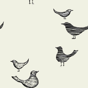 Black_and_Cream_Birds