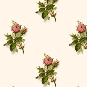 Pink Roses on Cream Background