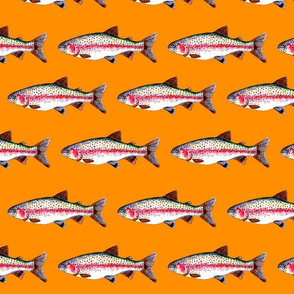 Rory the Rainbow Trout - bright