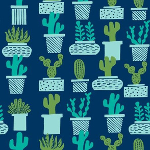 cactus // potted plants plants houseplants terrariums succulents
