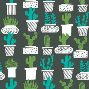 cactus // houseplants plants cacti succulents plants potted plants