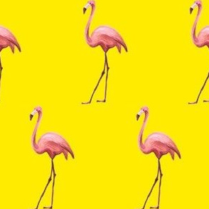 Flamingo Park - Bright Yellow