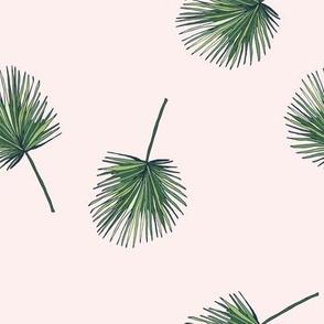 Pink Fern Palm