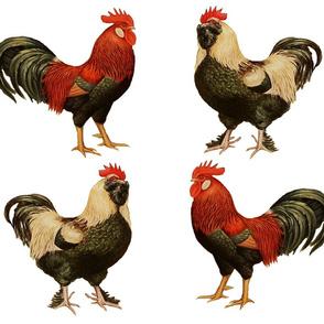 Vintage Roosters