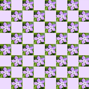 Perwinkle 1 inch Check