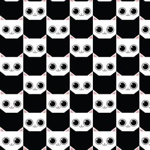 white_cat_black_bg