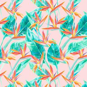 Birds of Paradise Blush Large Scale