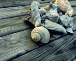 Shells2_thumb