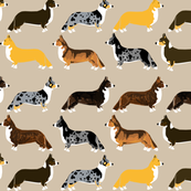 corgi corgis pet dog dog dogs cute corgi cardigan corgi welsh corgi red corgi