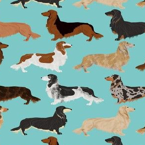 doxie dachshunds long haired long hair dachshund dogs pet dogs cute dog fabric for dog owners