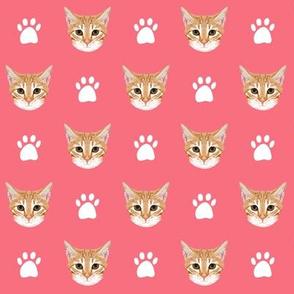 orange tabby cat coral pink girls sweet kitty kitten orange cat cat head cute cat design