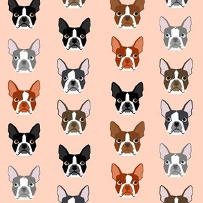 boston terrier faces cute dogs dog blush girly peach sweet pet dogs