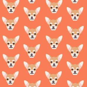 chihuahua dog dogs pet dog cute faces orange dog