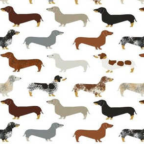 dachshunds coats colorings brindle red tan cute dogs dog pet dogs fabric