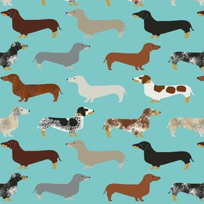 doxie dachshund dachshunds dogs dog pet dog doxie dog doxies cute puppy