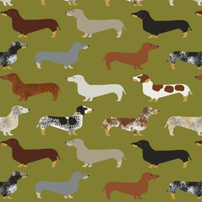 doxie dachshund dachshunds green dogs cute dogs pet dog fabric