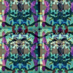 Toxicat's slightly-psychedelic lace look- Aqua Fox(y)