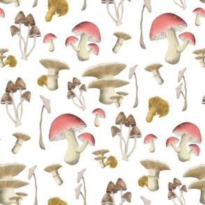 Mushroom Mix