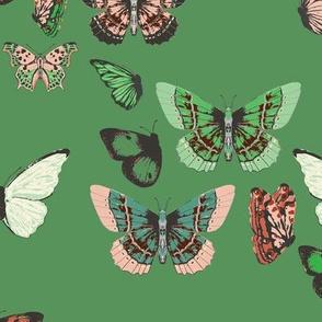 butterfly_swell_celadon