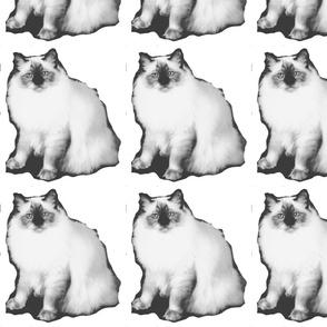 Burmese cat-ed