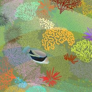 Humuhumu in Coral Garden