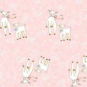 Lambs Pink