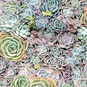 Dreamy Succulents // Greens