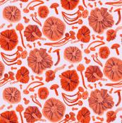 Mushroom Hunter- orange pop
