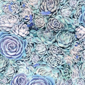 Dreamy Succulents // Blues
